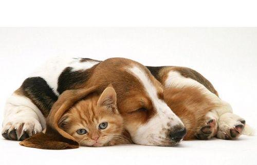 cica, kutya, kép