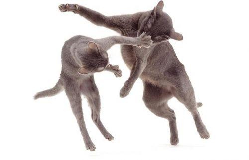 fénykép, macska, játék