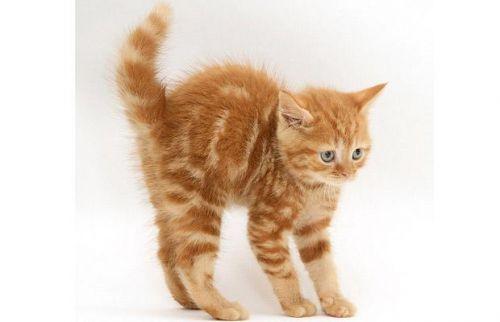 macska, cica, fotó