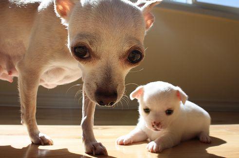kutya, kölyök, kiskutya