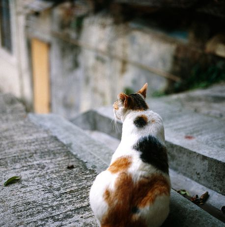 macska, cica, vemhes