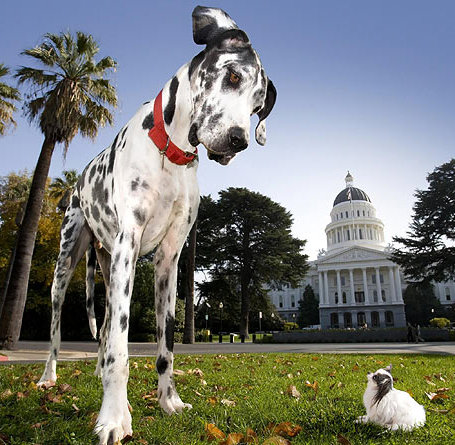 dog, chihuahua, kutya