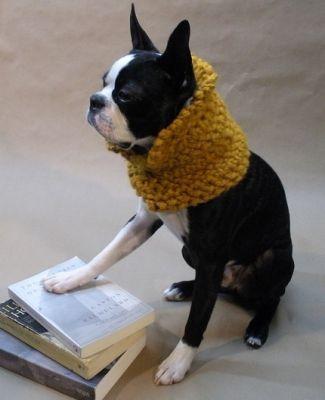 kutya, francia, bulldog, bolero