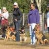 Kennel Club Crufts – a legnagyobb kutyakiállítás