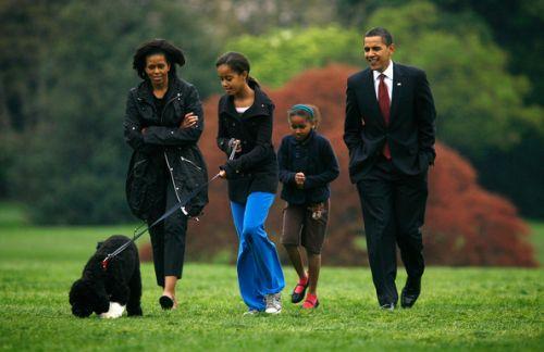 elnök, barack obama, kutya