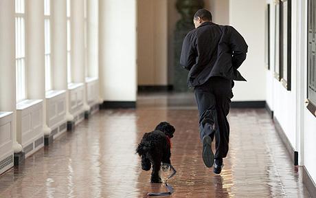 kutya, obama, bo