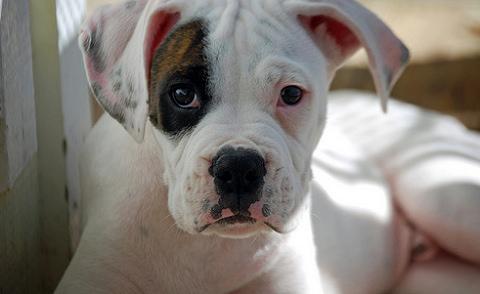 kutya, nevelés, erőszak