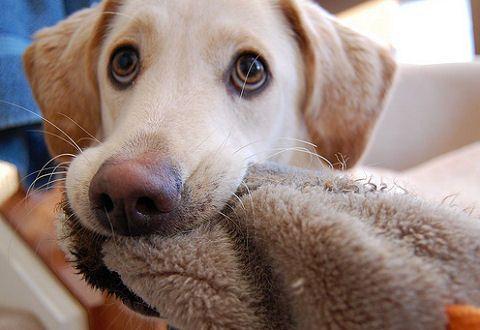 kutya, eb, élet