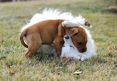 kutya, kína, háziállat