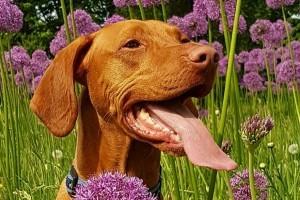 Kullancs a kutyában: így védheted meg a kutyádat a kullancsoktól