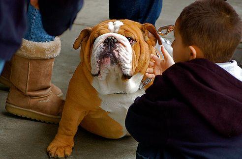 bulldog-es-gyerek