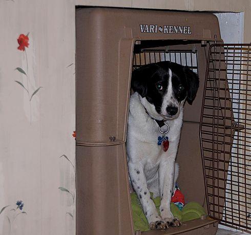 kisallat-ketrec-kutyanak