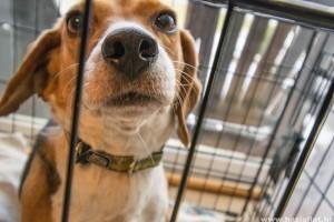 Kutyaház a lakásban: a praktikus és kényelmes kennel