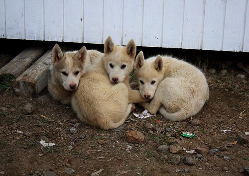 kutyakereskedelem