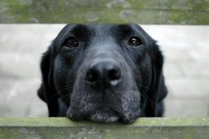 Illegális kutyakereskedelem