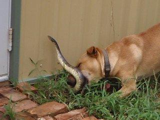 kigyo-marta-kutya