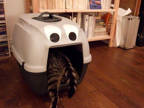 macska, szag, alom