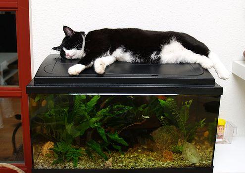 akvarisztika, akvárium, cica