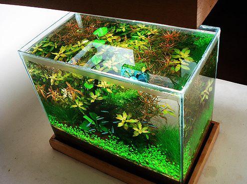 akvárium, levegőztető, halak