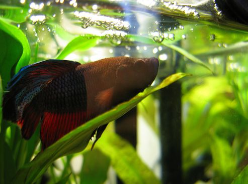 hal-az-akvariumban