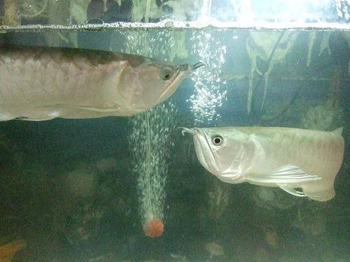 Akvárium vize