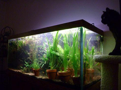 vilagitas-akvariumokban