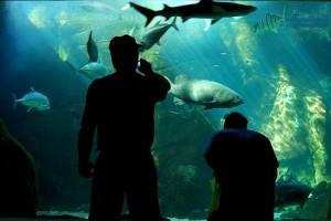 Akvárium karbantartás: ilyen a jó akvárium világítás