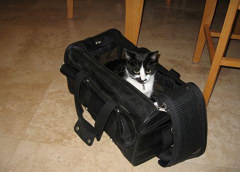 macska, hordozó, bőrönd