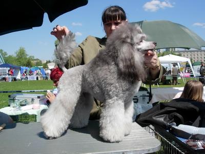 kutya, kiállítás, miskolc