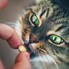 Hogyan adj be a macskádnak egy pirulát - video
