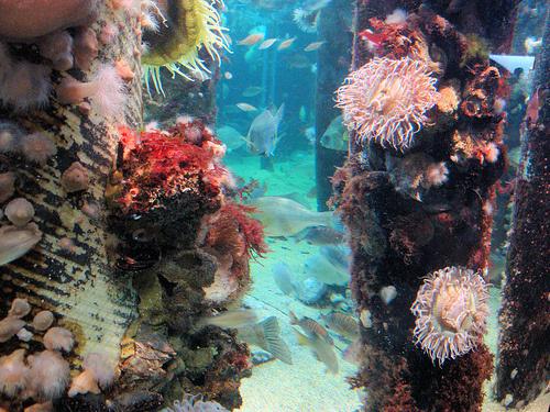 korall-akvariumok