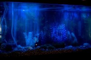 Természetes világítás az akváriumban