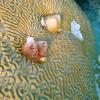 Korallszirtes akvárium világítása