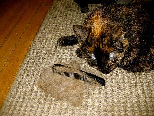 macska, szőr, kefe