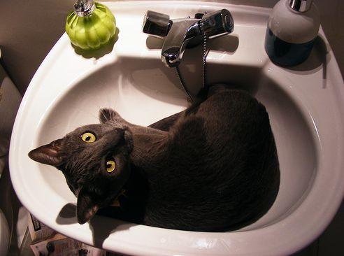 macska, cica, fürdetés