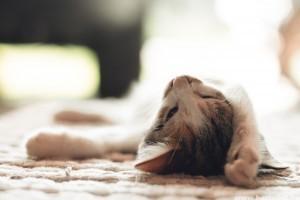 Kutya és macska allergia: mi okozza a viszketést és a vakarózást?