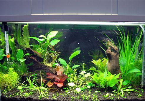 sós, víz, akvárium