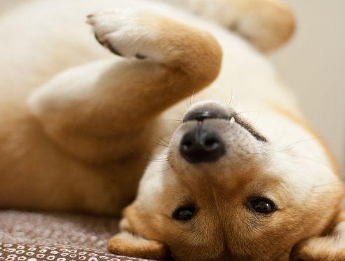 kutya, allergia, allergiás