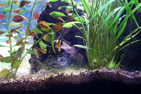 akvarisztika-kep