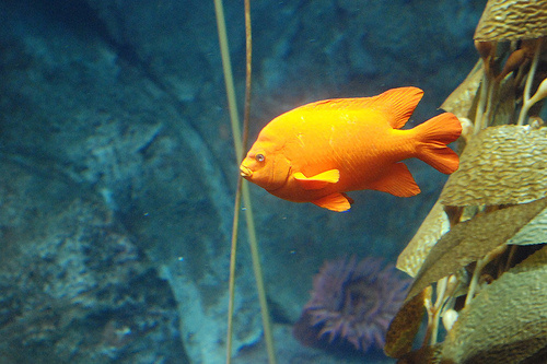 Narancs hal