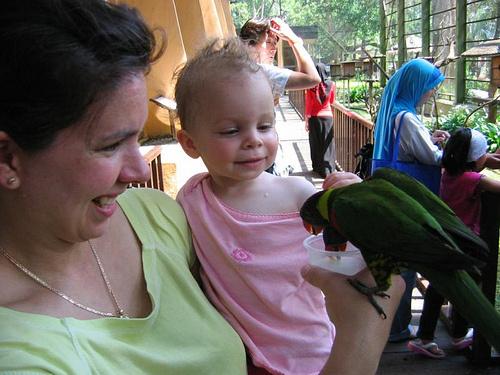 papagaj-tartok