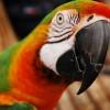 A madár csőre: anatómia és betegségek