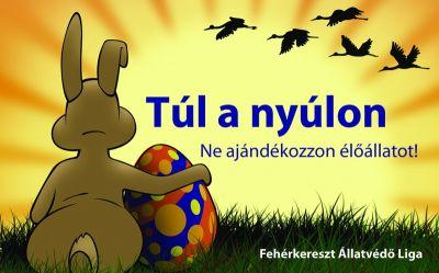 húsvét, nyúl, nyuszi