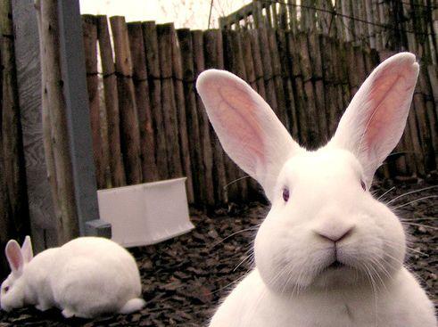 állatkert, nyuszi, húsvét