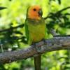 Hogyan neveld szobatisztaságra a madaradat?