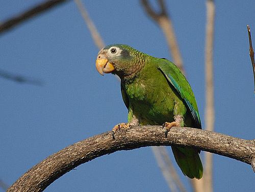 papagaj-a-szabadban