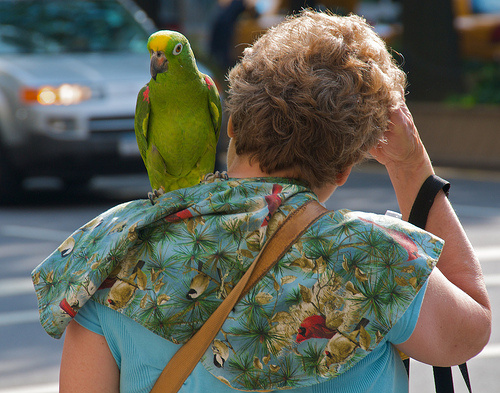 papagaj-seta