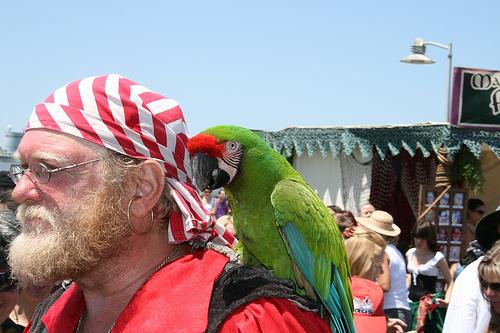 Papagáj vállon