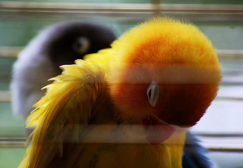 madár, kalitka, stressz