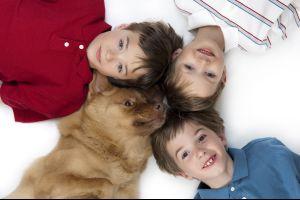 A kutyák és macskák bélférgei az ember egészségére is veszélyesek lehetnek!